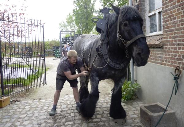 Hof Ten Dormal hest