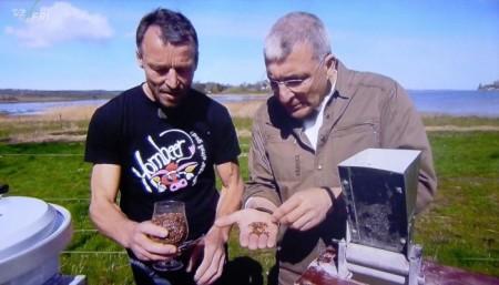 Hornbeer TV2 Fri Frihuset